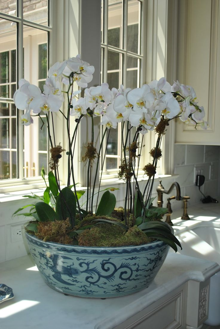 Orchids in blue porcelain. May do this with the large antique Willow-print bowl I have.