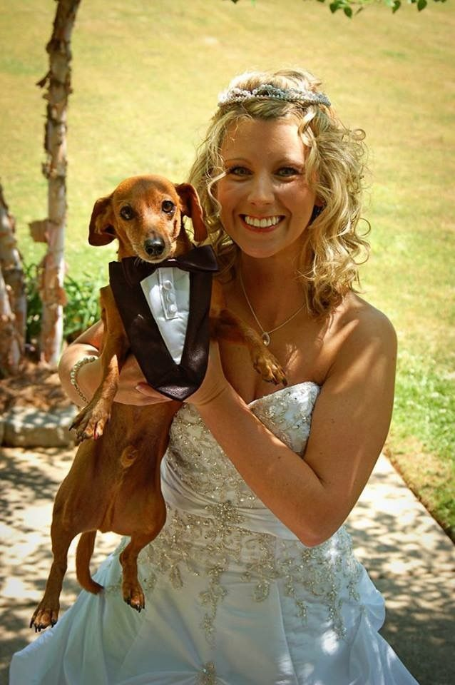 Married Dachshund