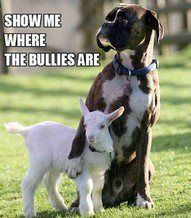 We have a Boxer who does this. He tries to put his arm around you.