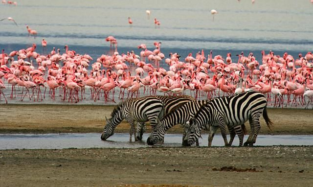 "Lake Manyara, Tanzania ~ ""The loveliest lake in the world"" Ernest Hemingway"