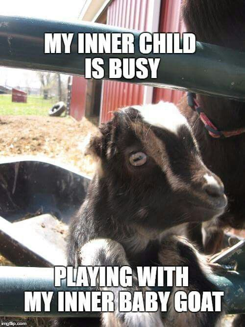 Funny Farm Animals Meme : Best gotta love goats and sheeps images on pinterest