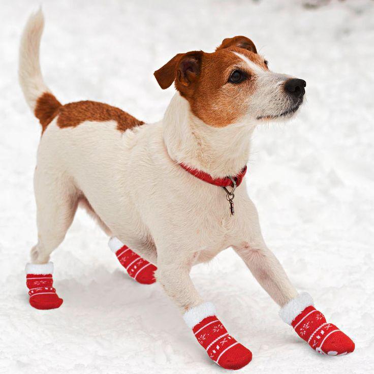 Ponožky pro psy, malé   Magnet 3Pagen #magnet3pagencz #3pagen #animals