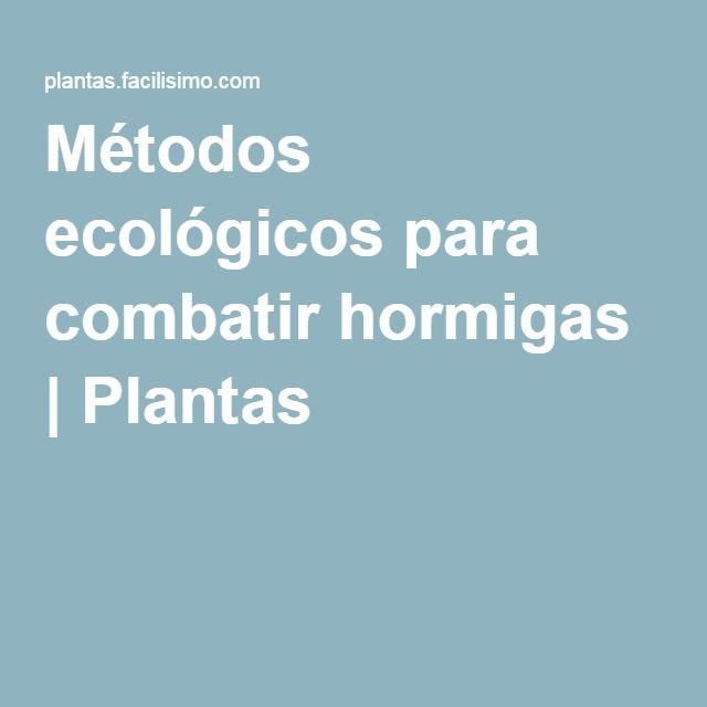 Métodos ecológicos para combatir hormigas | Plantas