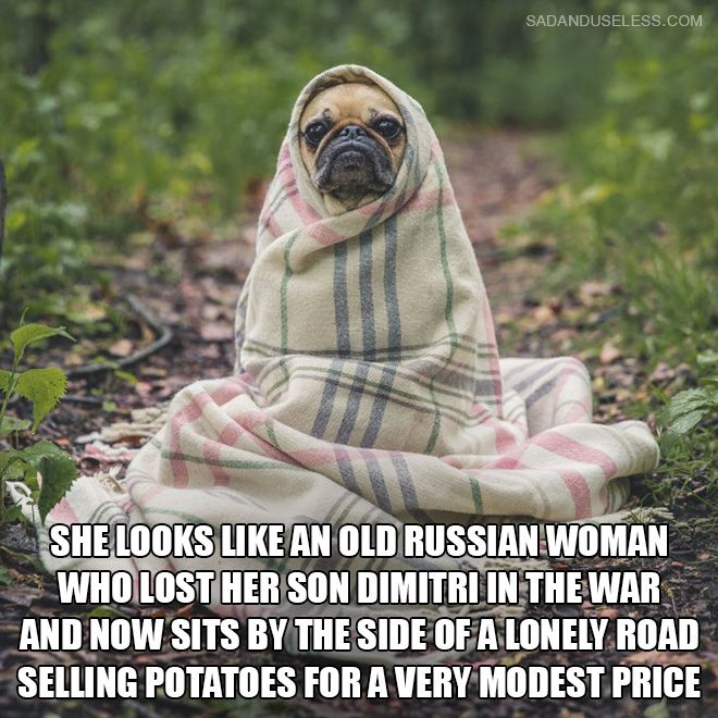 Dogs That Look Like Old Russian Ladies