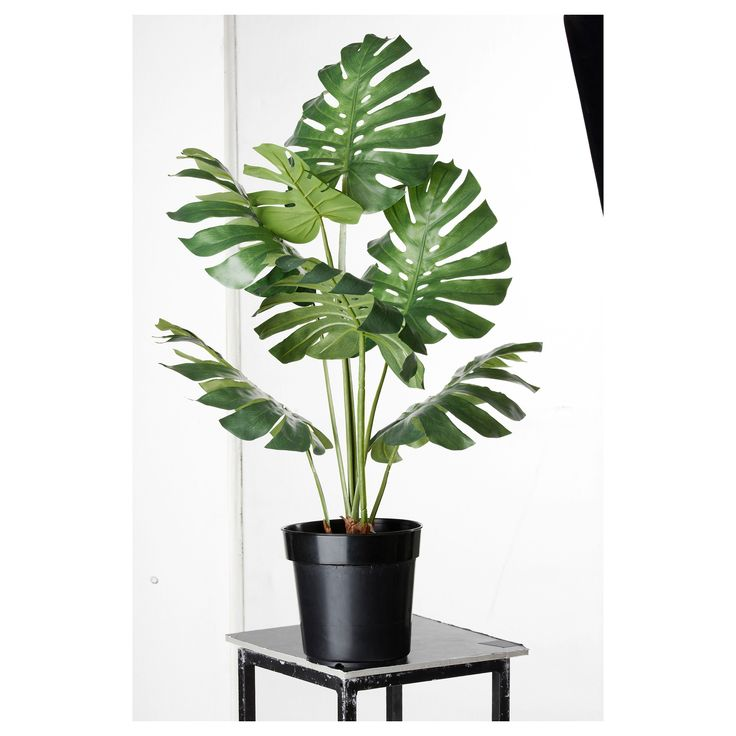 monstera potted plant city fiesta pinterest potted plants plants and ikea. Black Bedroom Furniture Sets. Home Design Ideas