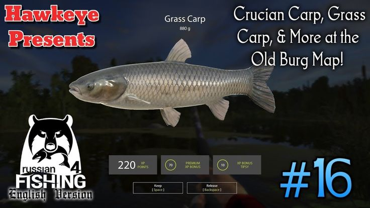 Russian Fishing 4 | ENGLISH | #16 - Crucian Cap, Grass Carp, and More at...