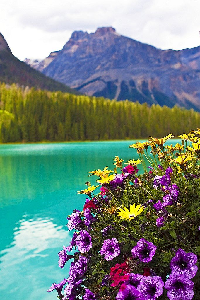 Emerald Lake ~ located in Yoho National Park, British Columbia, Canada