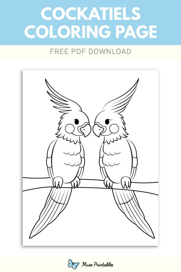 Free Printable Cockatiels Coloring Page Download It At Https