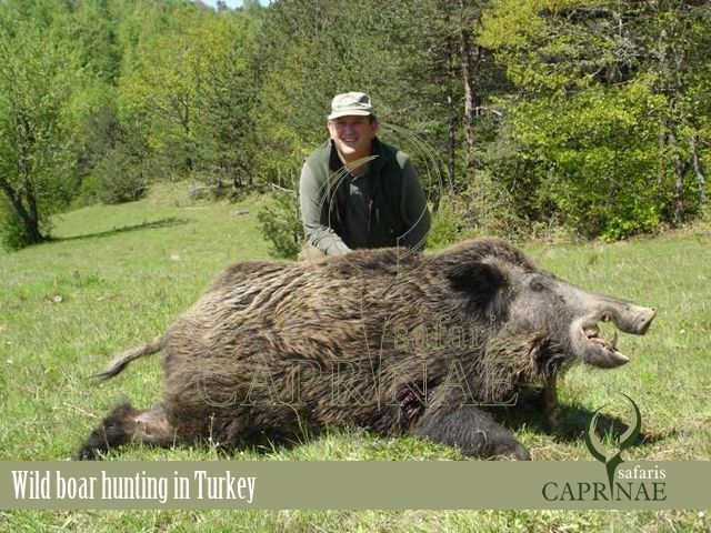 Wild boar hunting in Turkey http://riflescopescenter.com/category/hawke-riflescope-reviews/
