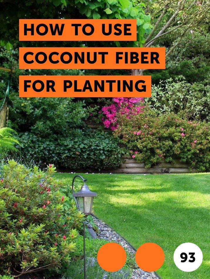 56455009ae9d0afc11983c1391689ef2 - How To Use Coconut Coir In Gardening