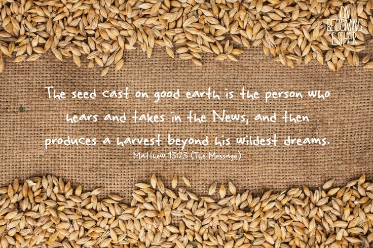 Matthew 13:23 The Message, the parable of the sower