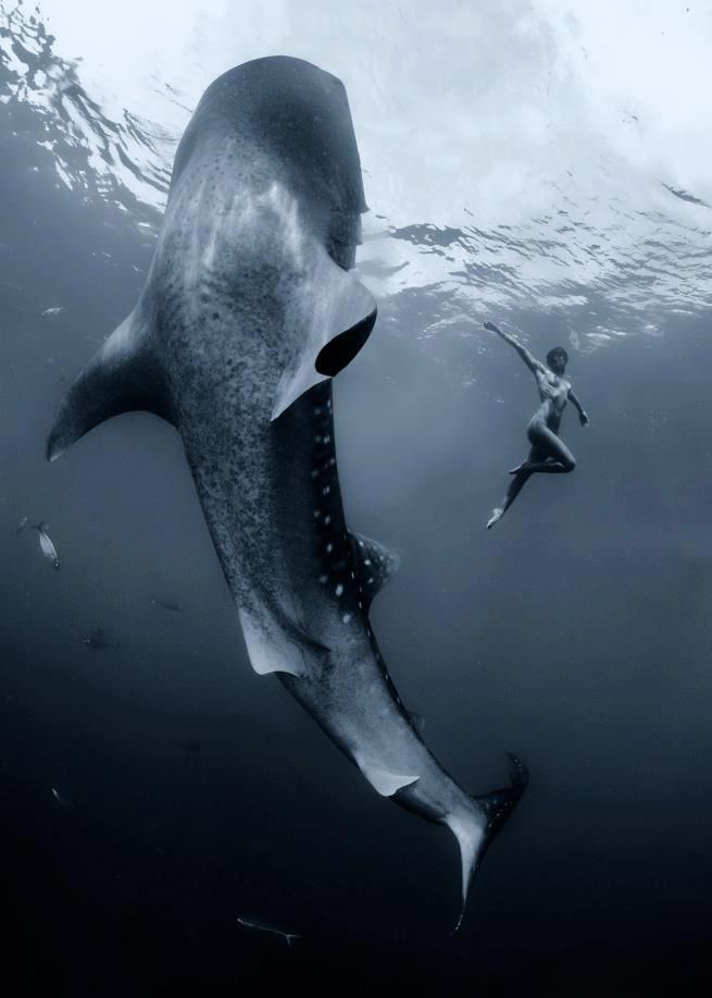 This picture is beyond breathtaking :: Underwater yoga with whale shark
