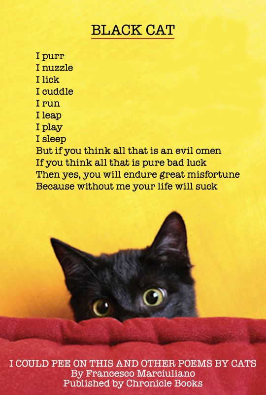 I love my black cat. Every black cat I have encountered has always been the sweetest cat! its the non-black ones that are a pain!