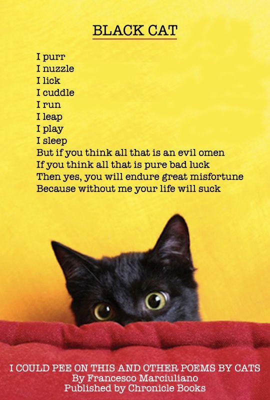 Black Cat Poem ICPOT