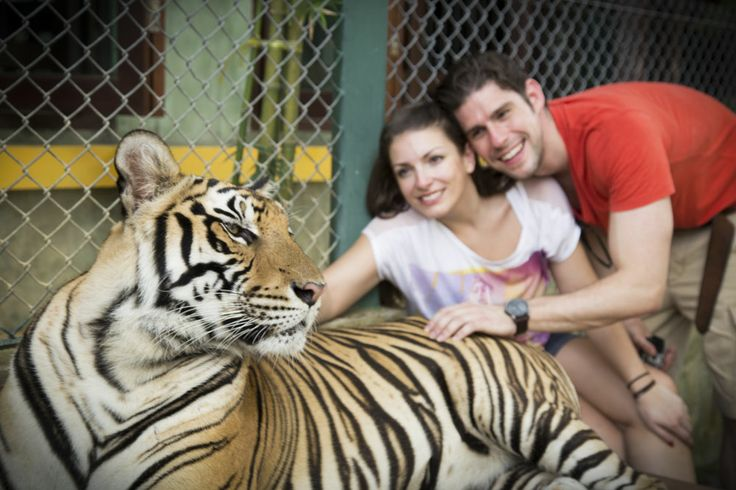 Tiger Kingdom, Phuket --> Follow us on http://instagram.com/travelloveorg