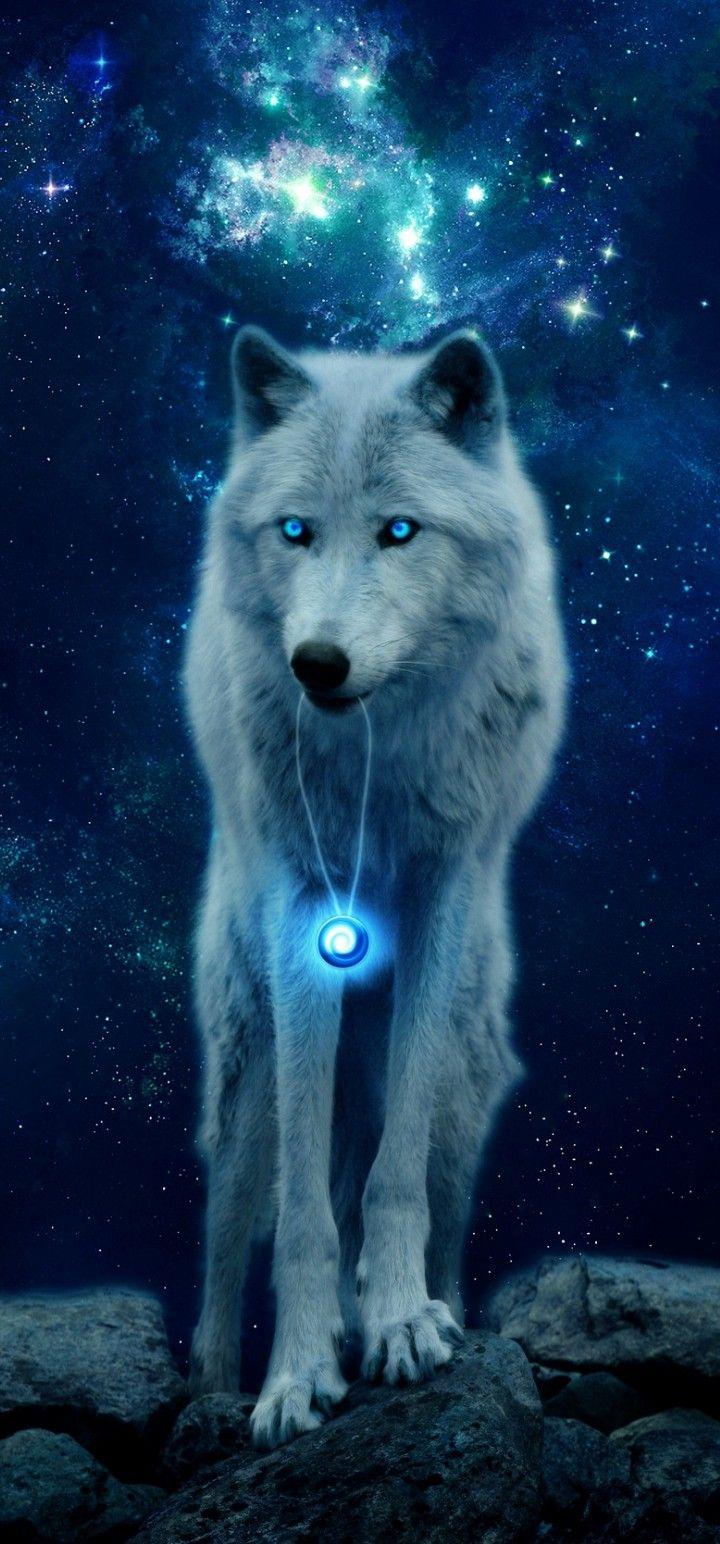 Обои волки. Животные foto 11