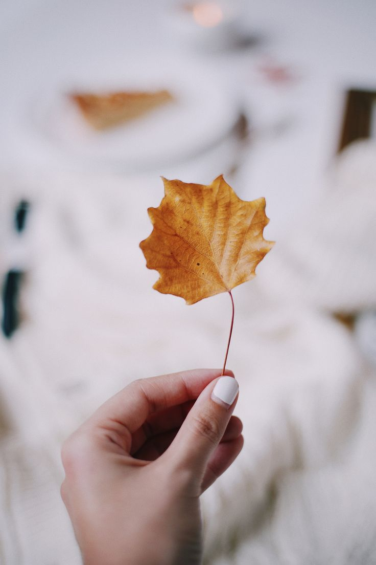 Since Fall started this week, I wanted to share my Fall bucket list which is filled with things I want to do to make the most of this time of the year.