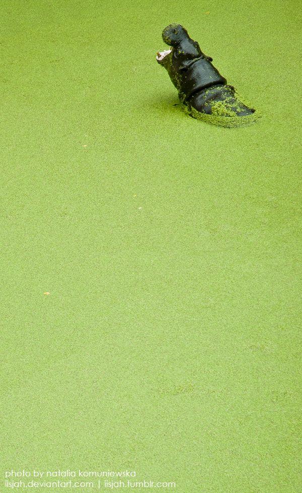 Pygmy hippo in the green by iisjah.deviantart.com on @deviantART