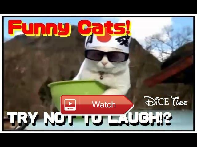 😸 Funny Cats Compilation Best Cat Videos Ever 😼 Funny Cats Compilation Best Cat Videos Ever MusicMaterial 😽 from Pet Lovers 😻