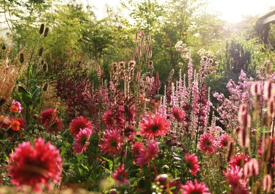 GALLERY   Huntingbrook Gardens