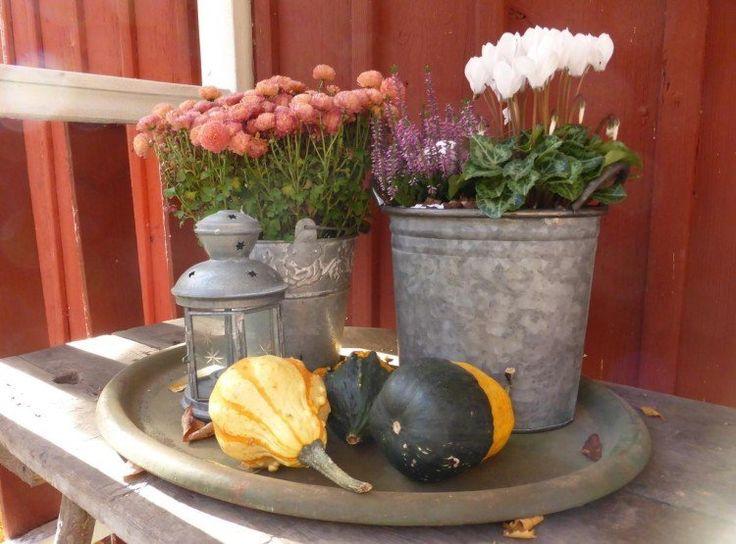 arrangements décoratifs de plantes d'automne en seaux- chrysanthèmes orange, bruyère lilas et cyclamen blanc