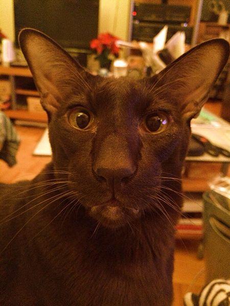 My Cat's Selfie « The Quirky Pixel