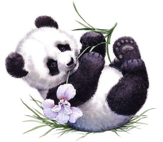 Картинки панда с цветком