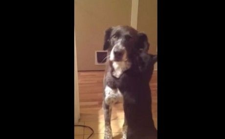 After Spending 10 Days Apart Cat Can't Stop Hugging His Dog Friend (VIDEO)