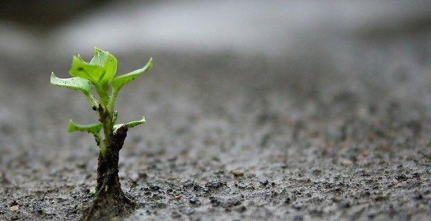 Цитаты о карьере: что растет на вершинах