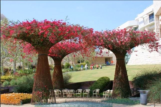 """Enormous bouganvilla """"trees"""" at the Getty Center, in Los Angeles"""