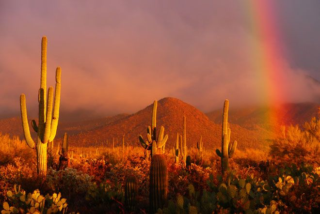 Saguaro National Park, Tucson, AZEye Of The Storms Quotes, Tucson Arizona, Beautiful, Saguaro National Parks, Places, Quotes Words, Popular Pin, Words Inspiration, Tucson
