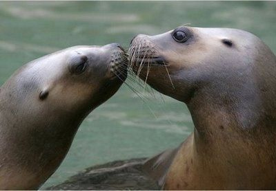 To be kissed on the cheek by a seal! when i was little alli wanted to do in life was to be a seal trainer...my parents still make fun of me till this day for it.