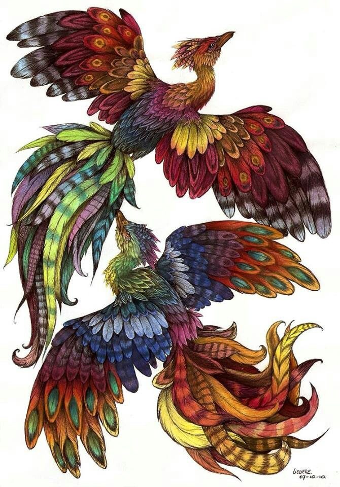 52 best phoenix images on pinterest phoenix bird tattoo for Huma bird tattoo