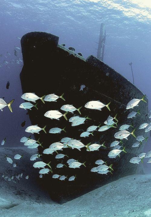 Sunk - Shipwreck
