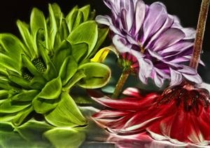 Red, Purple and Green  By Keri Harrish  keriharrishphotography.com