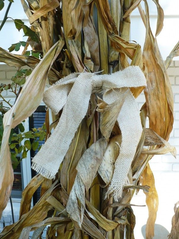 cornstalks tied together with burlap - Halloween Corn Stalks