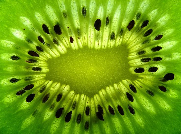 35 Breathtaking Examples of Patterns in Nature | DeMilked
