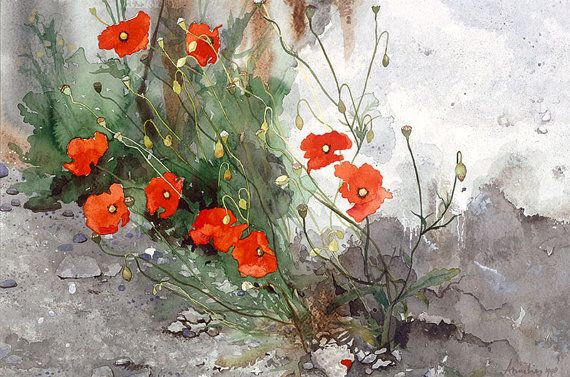 Wild Poppies Growing Out of a Wall  - or 'Break Lights' Watercolor  by  Annelies Clarke.
