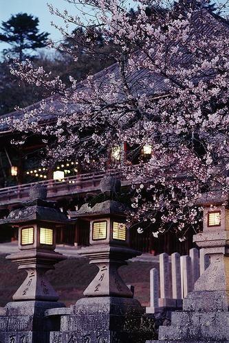 Todai-ji, Nara, Japan. One day.