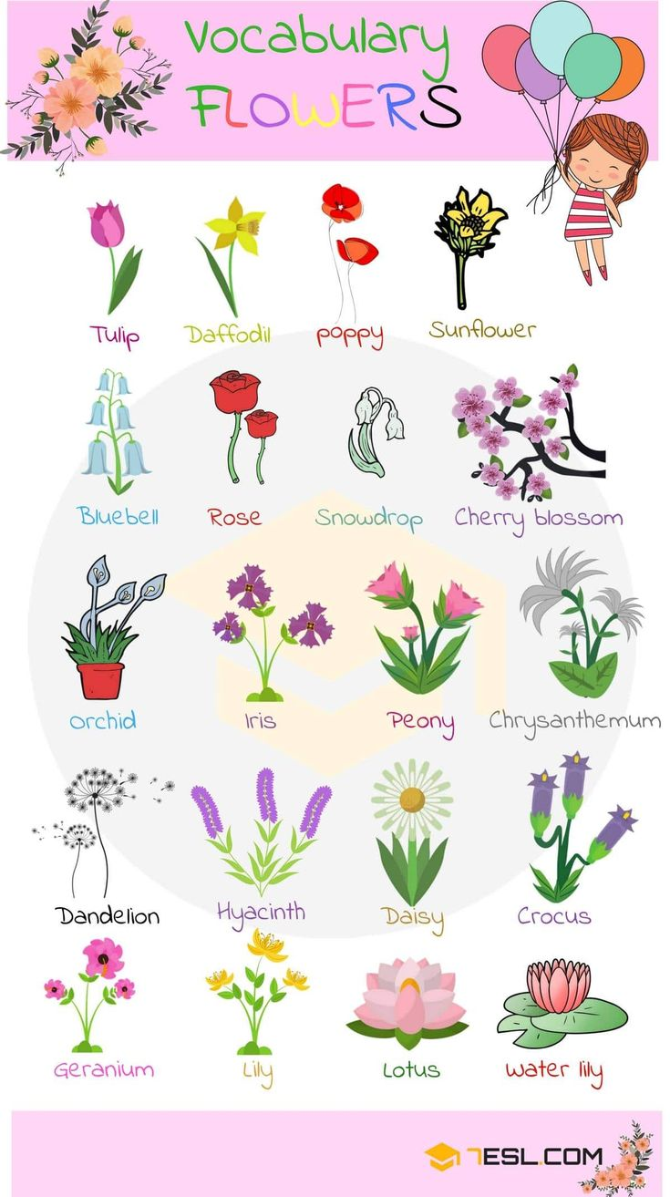 0shares Learn Plant and Flower Vocabulary in English through Pictures and Videos. Plants are one of five big groups of living …
