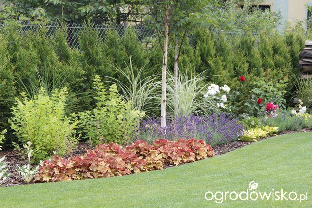 Zimozielony ogród przy białym domu - strona 209 - Forum ogrodnicze - Ogrodowisko