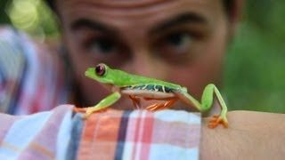 Follow the Frog - YouTube
