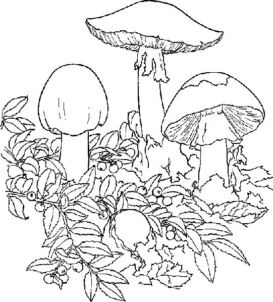 trippy coloring pages mushrooms nutrition - photo#37