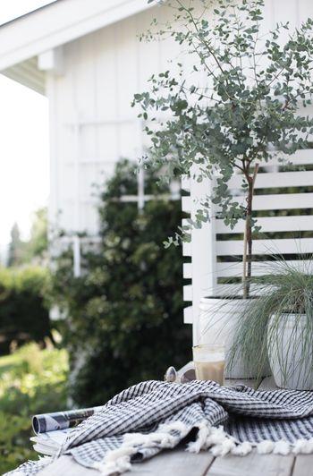 鉢植えで育ててるのも素敵。少し枝を切り分けてインテリアに使えて存分に楽しめます。