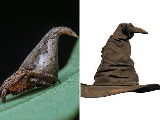 Il ragno che assomiglia al cappello parlante di Harry Potter