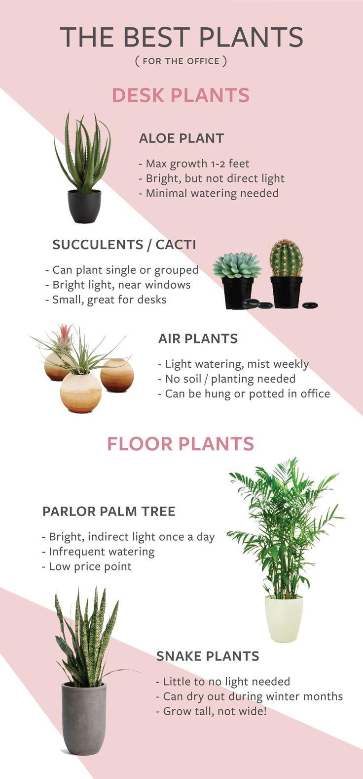 Best 25 office plants ideas on pinterest plants indoor inside plants and low light plants - The best office plants ...