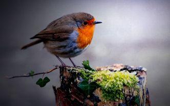 Wallpaper Desktop Background Bird (24)
