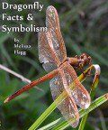 Dragonfly Facts and Symbolism