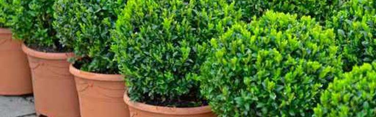 Online Nursery Basic Plant Care