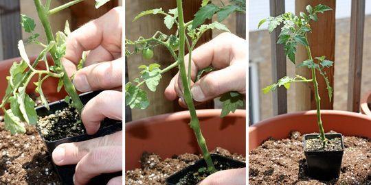How To Plant a Super Easy Tomato Container Garden – dans mon jardin.